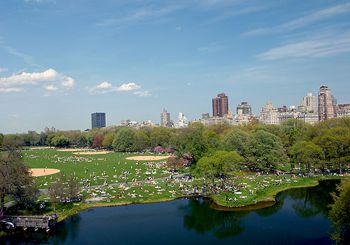 great lawn in Central Park New York City