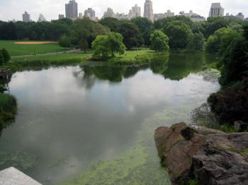 turtle pond in Central Park NYC